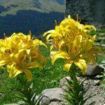 Bikewoche_Mont_Blanc_2011_041