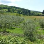 Veloferien_Toscana_2016_074