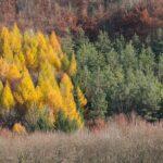Winterausmarsch_2011_002