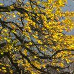 Winterausmarsch_2011_007