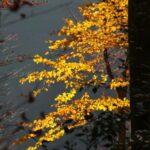 Winterausmarsch_2011_010